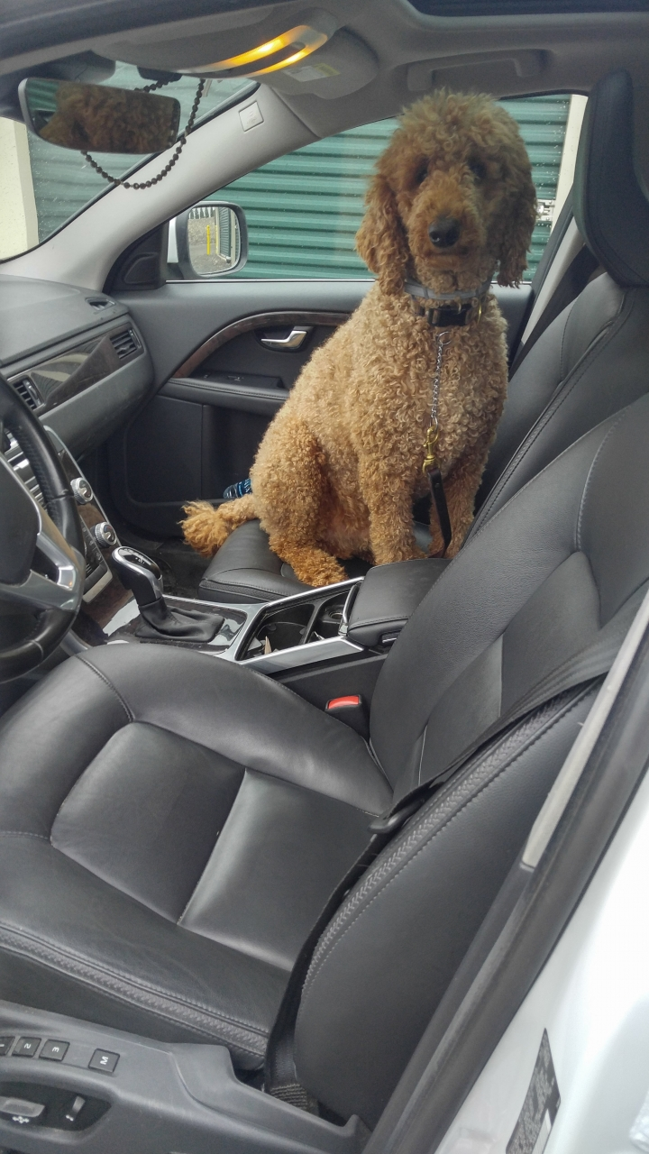 Poodle Adventure Day 1 2018-07-10 - Nice try willie,   not happening,   Momma goes in the front